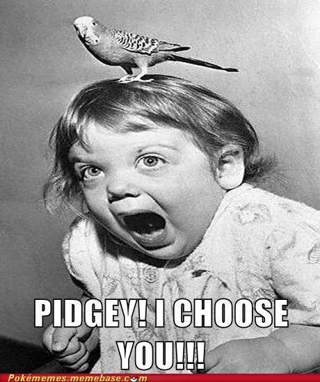 bird chill i choose you meme Memes pidgey