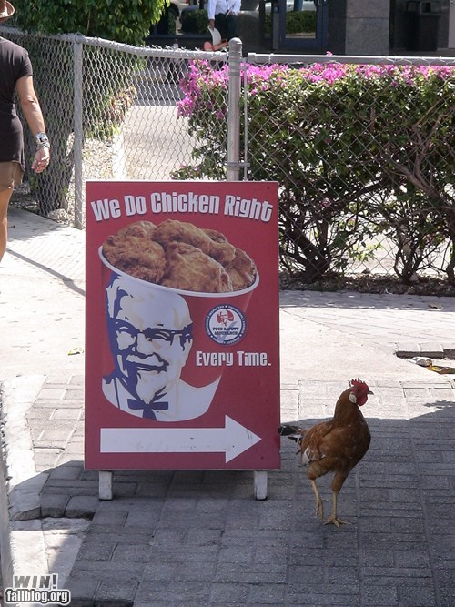 chicken escape fast food kfc survivor - 5981720832