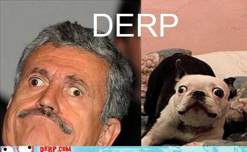 copy cat,derp,google