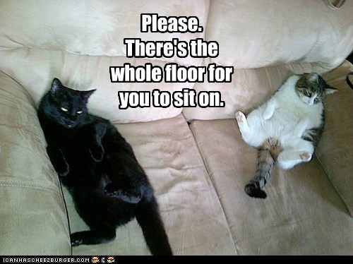 Cats,couch,floor,please,sit,stop,suggestion,taken,whining,whole