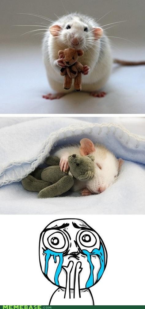 crying,cute,mouse,Rage Comics,squee,teddy bear