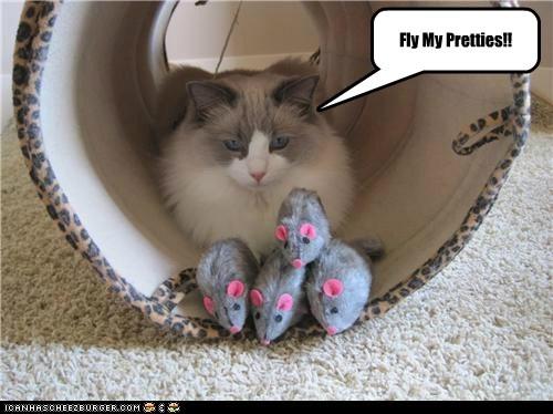 Fly My Pretties!!