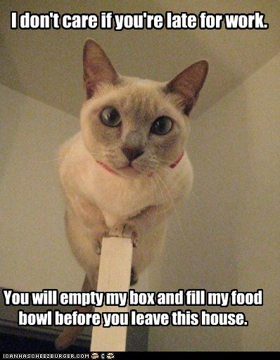 I don't care if you're late for work. You will empty my box and fill my food bowl before you leave this house.