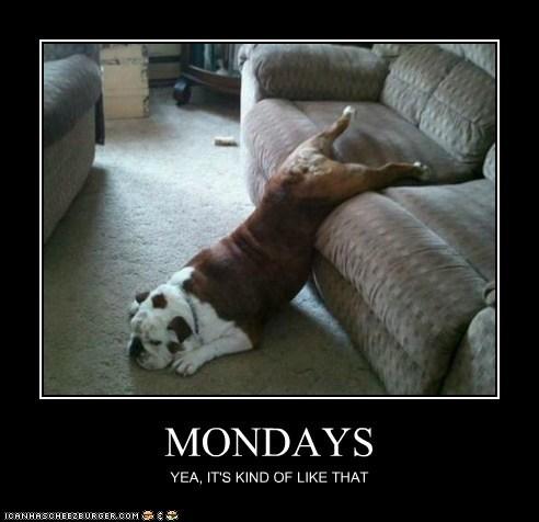 bulldog demotivational dogs funny - 5984583936
