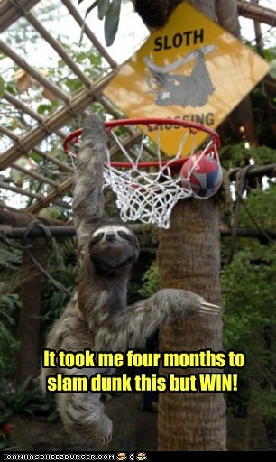 basketball,months,slam dunk,sloth,sloths,slow,win