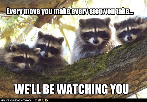 creepy,every breath you take,raccoons,stalker,watching you