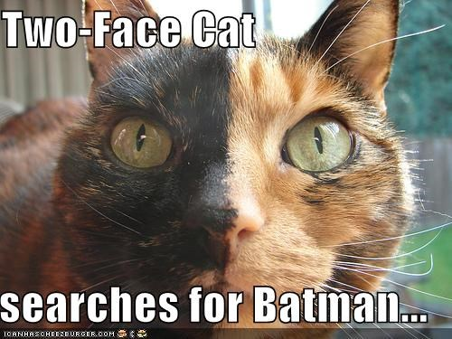 Two Face Cat Searches For Batman Cheezburger Funny Memes