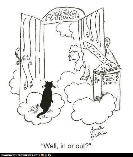annoying,cat,heaven,in,indecisive,out,pearly gates,st-peter,trufax,truth