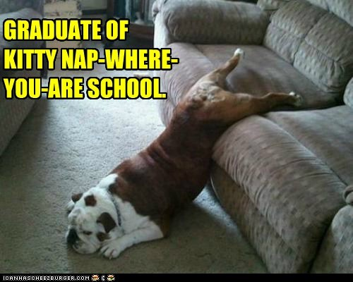 GRADUATE OF KITTY NAP-WHERE-YOU-ARE SCHOOL.