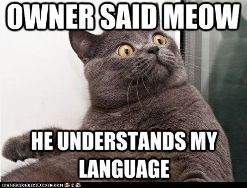 cat inglip language meow mind blown owner said - 5985882368