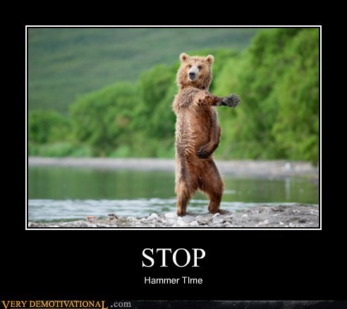 bear,hammer time,hilarious,stop,wtf
