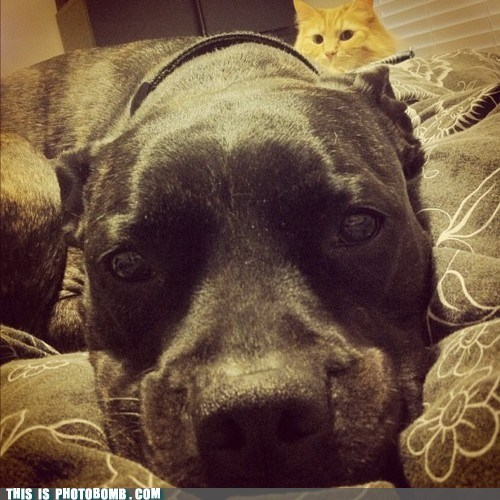 Animal Bomb,animals,bed,Cats,cute,dogs