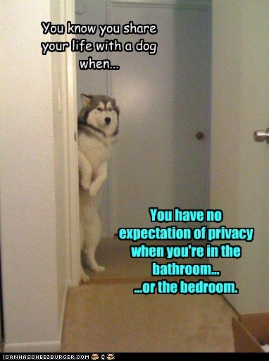 You know you share your life with a dog when... You have no expectation of privacy when you're in the bathroom... ...or the bedroom.