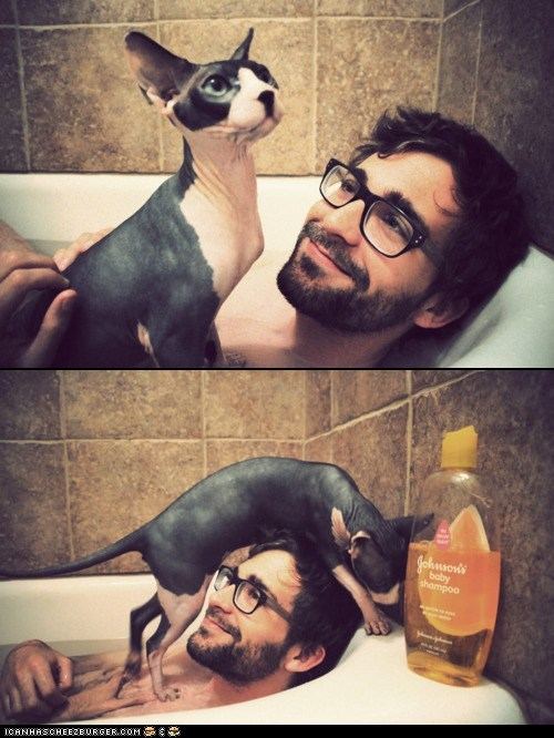 bath,cat,chilling,family,friendship,human,love,pet,sphynx,true love