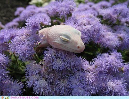 albino flowers lizard pink whatsit wednesday white - 5986435328