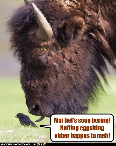 bird boring buffalo exciting happens lick life nothing startled