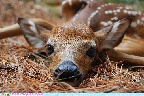 deer fawn le tired sleepy tired - 5986562816