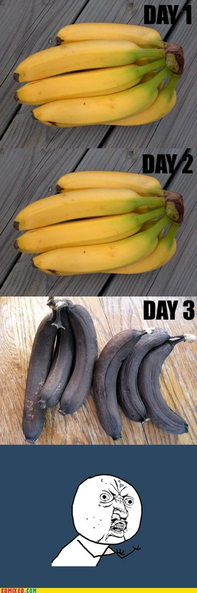 banana,rotten,the internets,Y U NO