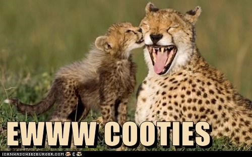 baby animals cheetahs cooties eww kissing - 5986722048