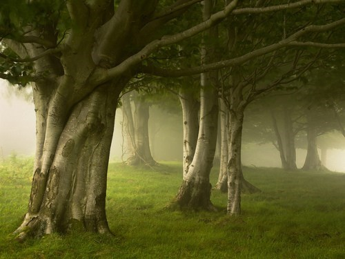 fog,Forest,Hall of Fame,Spain