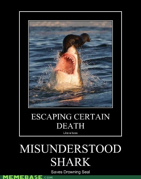 jaws,misunderstood mitch,saved,seal,shark