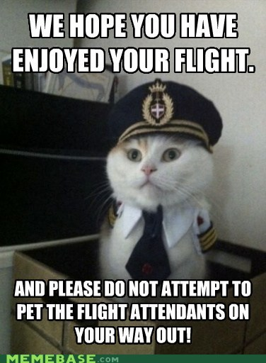 airlines captain kitty flight Memes pet - 5986960896