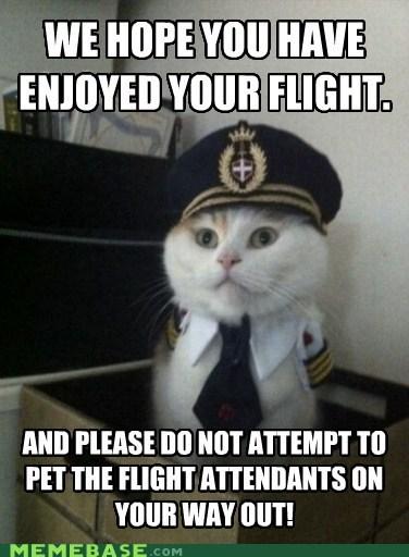 airlines captain kitty flight Memes pet - 5986960896