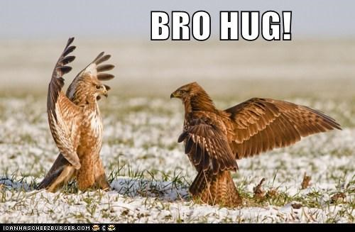 bros buzzards hug i know that feel bro men