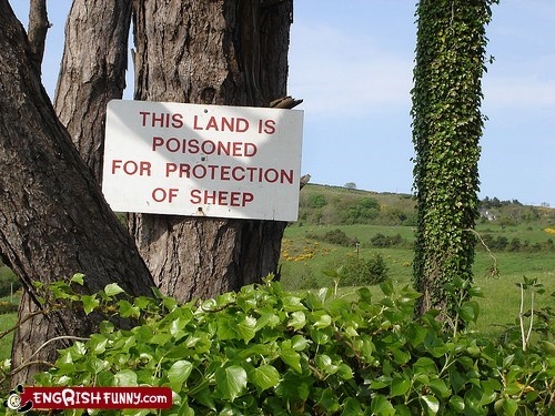 engrish,grazing,pasture,poison,sheep,sign