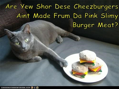 Cheezburger Image 5987925504