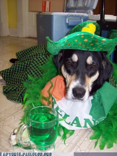 after 12,beer,crunk critters,dogs,g rated,green,St Patrick's Day