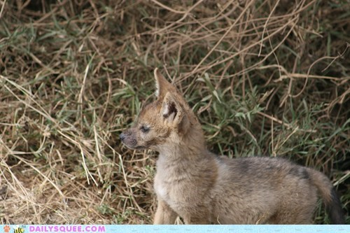 camouflage grass jackal puppy - 5988070144