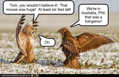 australia believe it best of the week Hall of Fame huge kangaroo mouse owls wouldnt - 5989306368