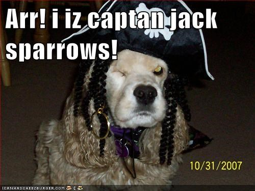 cocker spaniel dogs funny jack sparrow - 5989508864
