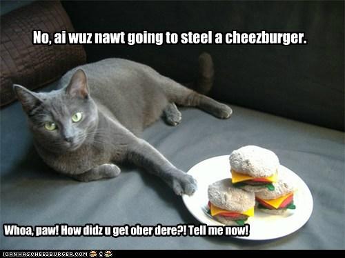 Cheezburger Image 5989902336