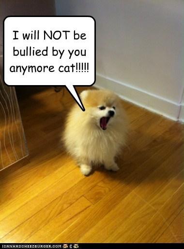 cyoot Fluffy funny pomeranian - 5990068992