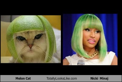 celeb,funny,melon cat,Music,nicki minaj,TLL