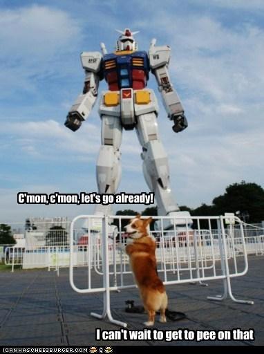 corgi dogs funny - 5990189312