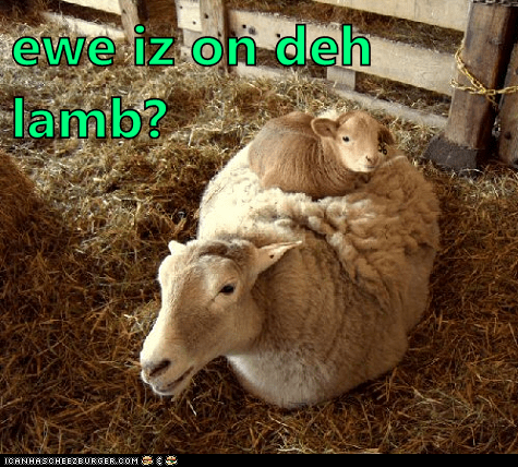baby animals,ewe,lamb,on the lamb,puns,sheep,wool