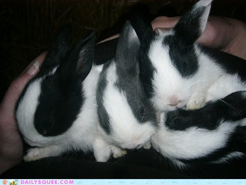 Babies,Bunday,bunnies,pets,reader squees