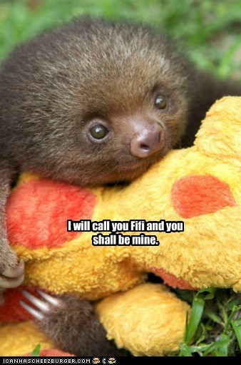 baby animals,be mine,best of the week,Hall of Fame,hugging,I will call you,shall,sloth,stuffed animal