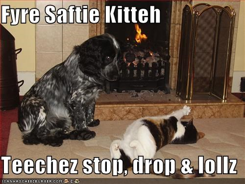 brittany spaniel fireplace lolcats - 599168768