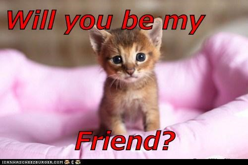 Will You Be My Friend Lolcats Lol Cat Memes Funny Cats