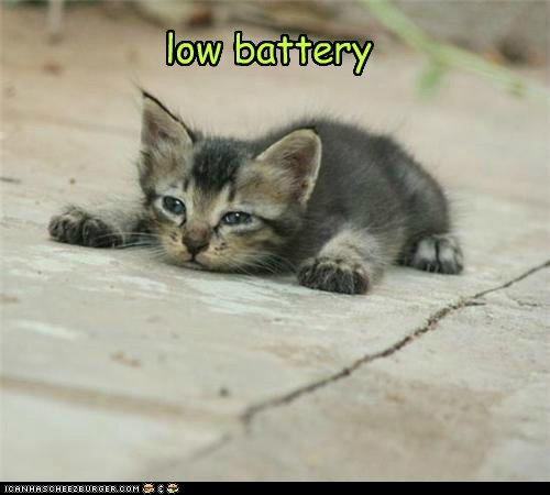 battery best of the week Cats energy exhausted Hall of Fame kitten level low tiny tired - 5992634880