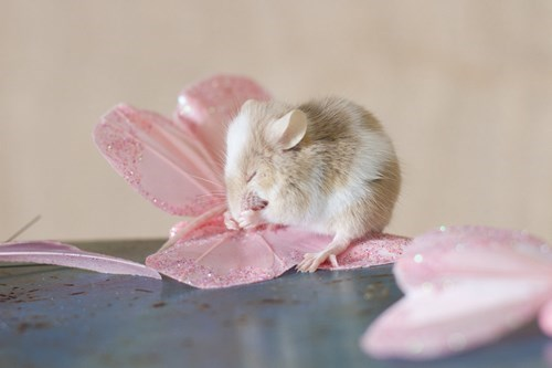 cheese Flower mice mouse pray praying squee - 5992820224