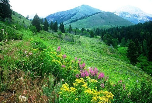 Idaho mountain wildflowers - 5993744640