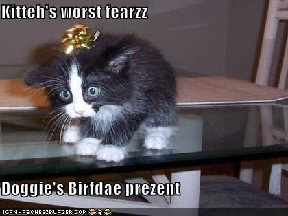 Cheezburger Image 599422208