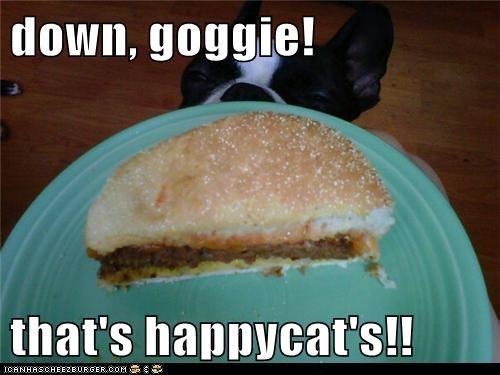 Cheezburger Image 5994325248