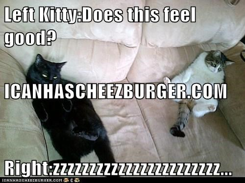 Cheezburger Image 5994333952
