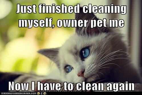 first world cat problems - 5994441216